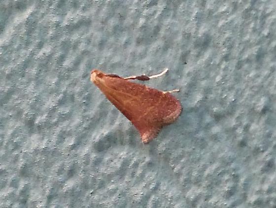 office moth 1 - Arta statalis