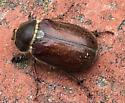 June Beetle ??