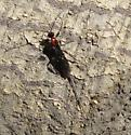 OR crater wasp