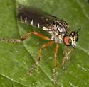 Fly IMG_0328 - Taracticus octopunctatus