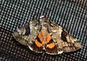 7/3 2nd moth - Catocala micronympha