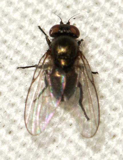 fly062019-6