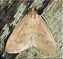 Framinghamia helvalis
