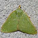 Xerochlora mesotheides - Chloraspilates bicoloraria - female