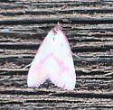 Phytometra ernestinana