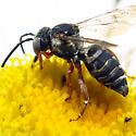 Cuckoo Bee - Triepeolus? - Triepeolus eliseae - female