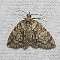 Renounced Hydriomena - Hodges#7236 - Hydriomena renunciata