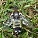 Fly or Bee - Villa