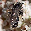 ID for a hymenopteran? - Paratiphia