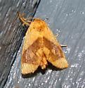 Inverted Y Slug Moth - Apoda y-inversum