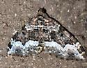 Sharp-angled Carpet? - Euphyia intermediata