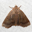 Variable Sallow - Hodges #9941 - Sericaglaea signata