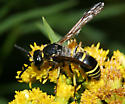 wasp - Ancistrocerus antilope - female