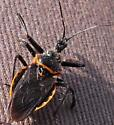 GA insect - Apiomerus crassipes
