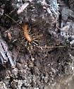 LLELA Bug