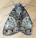Allotria elonympha (False Underwing) - Allotria elonympha