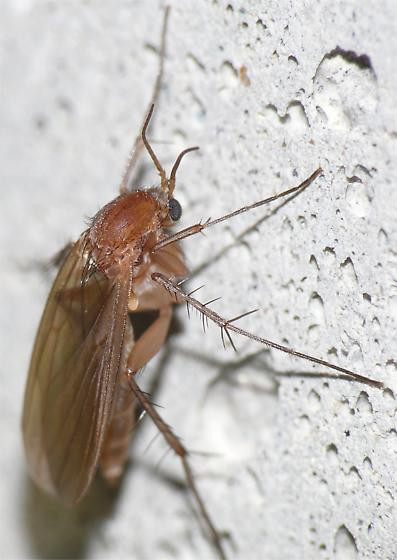 Small brown flying insect