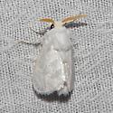 White Flannel moth - Hodges#4650 - Norape ovina