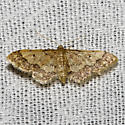 Hodges#7109 - Idaea celtima