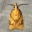 Cenopis reticulatana