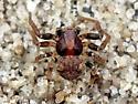 Ground Crab Spider..? - Ozyptila