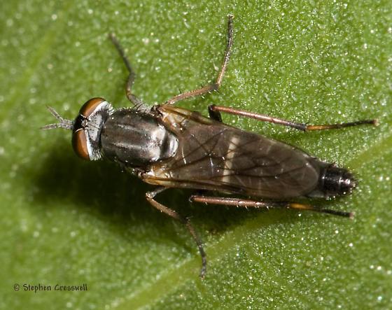 Little Fly on the Prairie