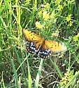 Butterfly ID needed - Speyeria idalia - male