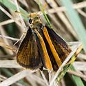 Unknown Skipper - Oarisma garita