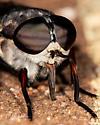 Big fly!