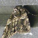 April Underwing - Catocala ilia