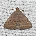 Hodges#8347 - Zanclognatha obscuripennis