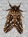 Silver-spotted Tiger Moth - Lophocampa argentata - male