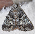 Stumped - Allotria elonympha