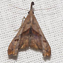 Dark-spotted Palthis Moth - Hodges #8397 - Palthis angulalis - male