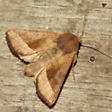 9514 Rosy Rustic - Hydraecia micacea