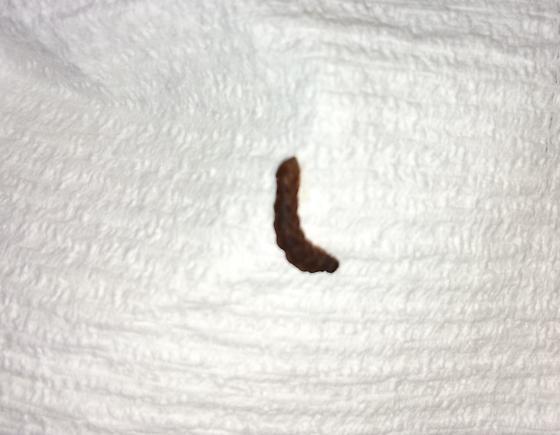 Weird wormy thing