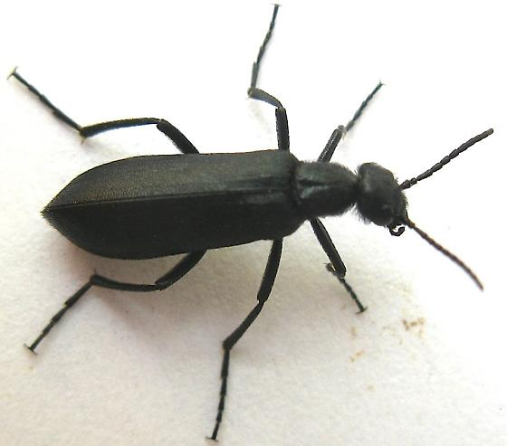 how to get rid of blister beetle bites