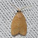 Moth unknown - Sparganothoides lentiginosana - male