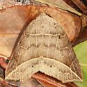 Thin-lined Owlet - Hodges#8493 - Isogona tenuis