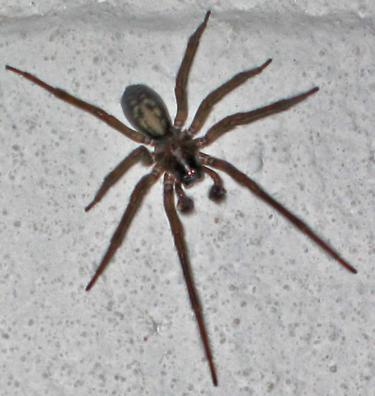 Basement Bugs: Large Spider In Basement