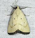 It has brown front legs - Marimatha quadrata
