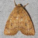 Dotted Sallow Moth - Hodges#9961  - Anathix ralla