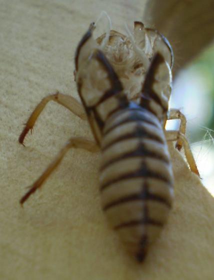 Mystery molting - Platypedia