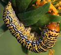 Basilodes chrysopis