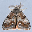 8310   - Orgyia magna