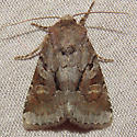 9416 Small Brocade - Oligia minuscula