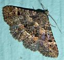 Common Fungus Moth - Metalectra discalis