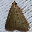 Hodges #5531 – Hypsopygia nostralis – Southern Hayworm Moth - Hypsopygia nostralis