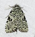 Very green - Leuconycta diphteroides