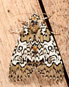 Owl-eyed Bird Dropping Moth - Cerma cora